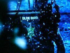 kék madár 13-as